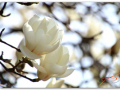 [성모님께 드리는 잔 꽃송이] 제9일 : 5월 9일