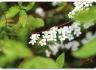 [성모님께 드리는 잔 꽃송이] 제24일 : 5월 24일
