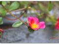 [성모님께 드리는 잔 꽃송이] 제29일 : 5월 29일