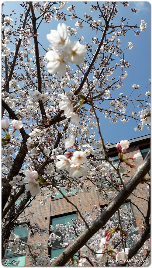 봄 처~녀 제~오시네~~^^